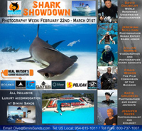 Bimini Sands & Neal Watson�s �Hammer Headquarters� Announce Announce: SHARK SHOWDOWN 2014 Photography Week