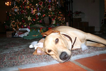 christmas_day_2006_076_1__copy.jpg
