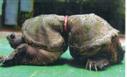 sea-turtle-deformed.jpg