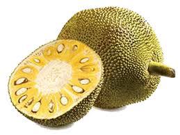 Jack-fruit.jpg