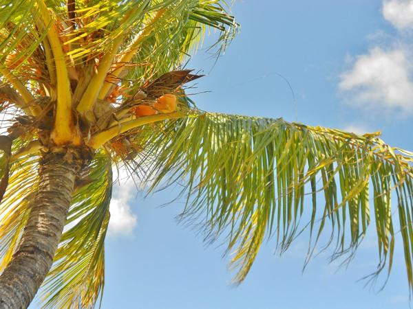Palm-Garelle-Hudson_1.jpg