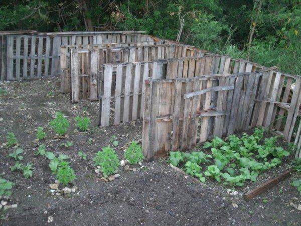 A Backyard Garden In Grand Bahama Island Photo: Luckner Timothee