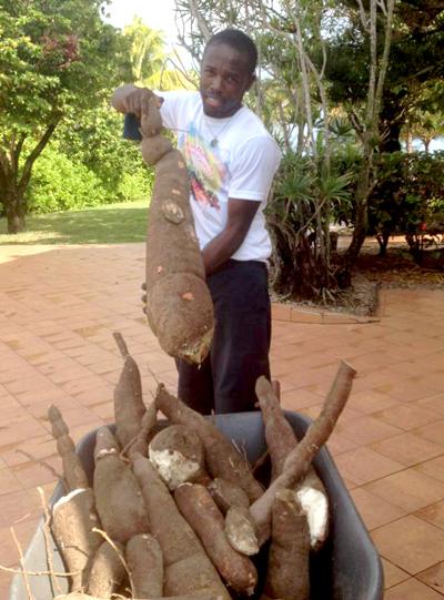 Cassava-4.jpg