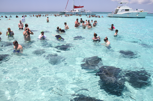 Tourists_with_Stingray_Credit_Guy_Harvey-2.png