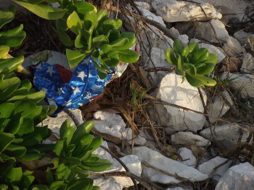 Another_discarded_mylar_balloon__adanger_to_wildlife__on_Williams_Town_Beach__Grand_Bahama_Island__photo_by_Gail_Woon.jpg