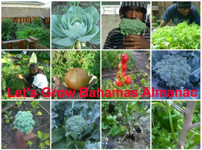 Bahamas-almanac.jpg