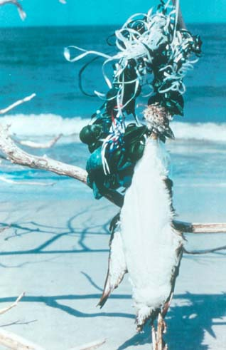 Bird_dead_from_balloon_ribbon_Photo_courtesy_of_The_Ocean_Conservancy.jpg