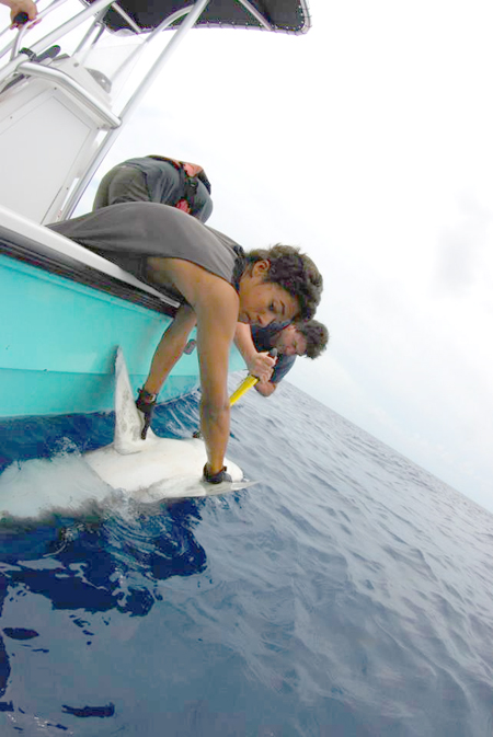 Shark_Research_Expedition_1.jpg