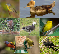 S-Birds.jpg