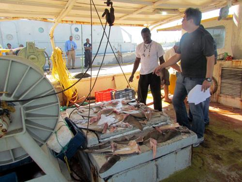 Jamaica-Fisheries-authoriti.jpg