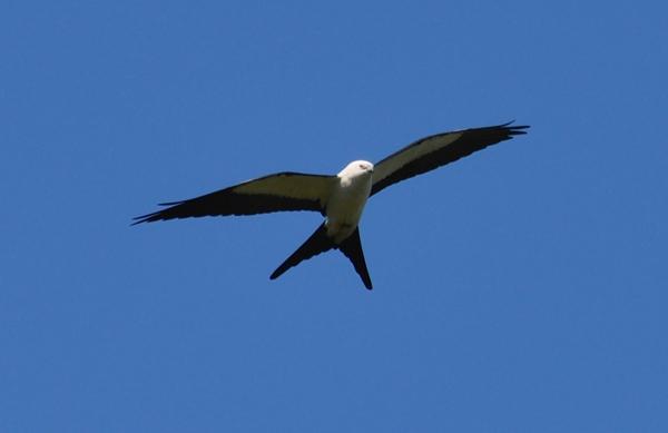 birdflight.jpg