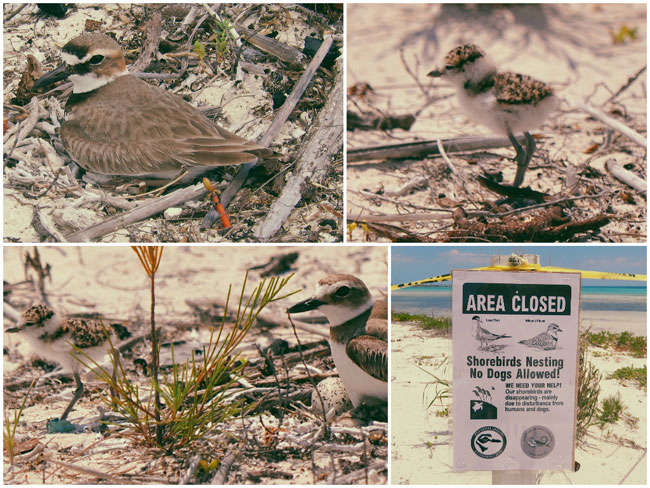 shore-baby-birds.jpg