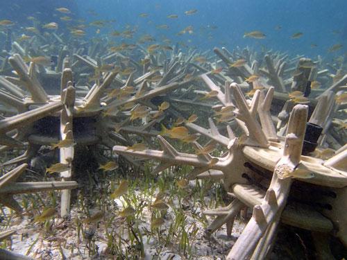 Baha-Mar-Coral-Antlers.jpg