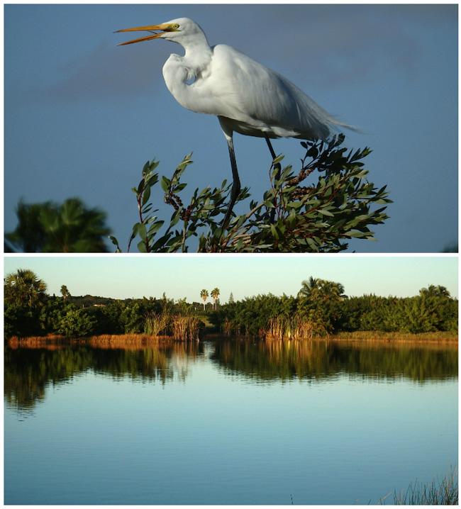 Bird-Lagoon.jpg