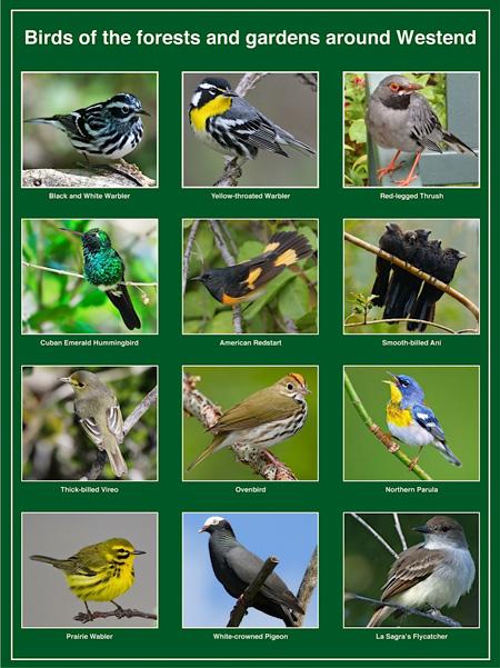 Bird-Sign.jpg