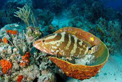 Grouper-2---Credit---Stuart-Cove-Fin-Photo.jpg