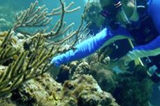 S-Guana-Cay-reef.jpg
