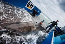 Sm-Shark.jpg