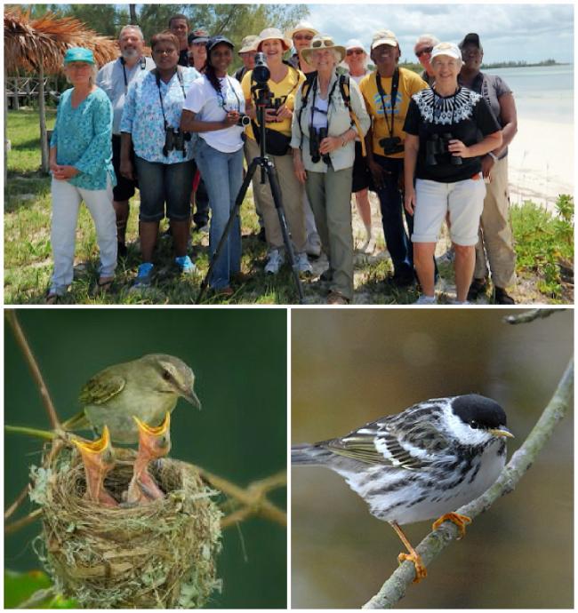 Birding-group-GBI.jpg