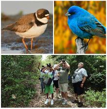 Birding-sm.jpg
