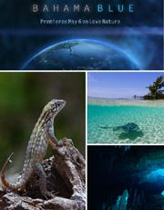 S-Bahama-Blue.jpg