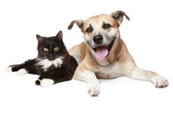 Sm-Dog-cat.jpg