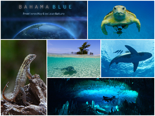 W-Bahama-Blue.jpg