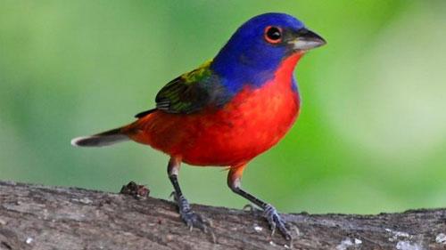 bird-lg.jpg