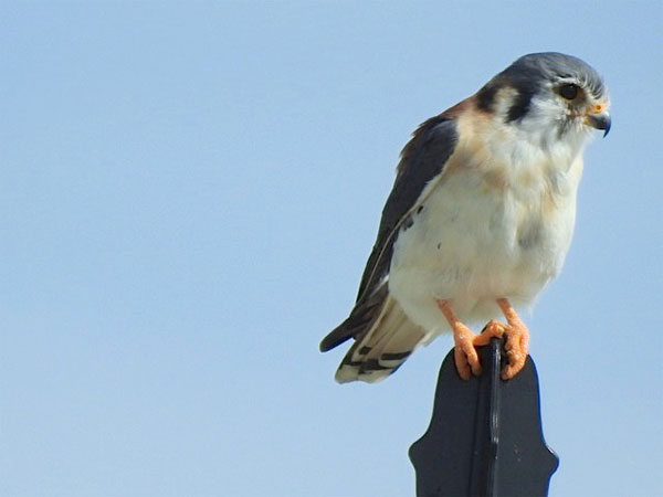 photo-bird.jpg