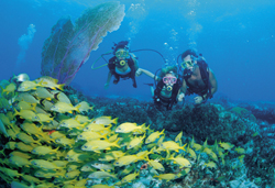 sm-Diving-In-The-Bahamas.jpg