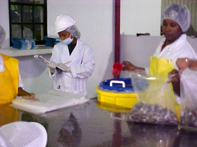 BAHA-monitors-seafood-processing-plants.jpg