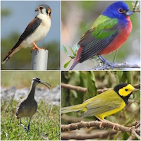 Birdcount-Species-S.jpg