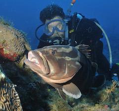 Grouper_Shedd_Aquarium_Keith_Pamper.jpg