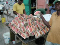 Queen-Conch-Caribbean-SM.jpg