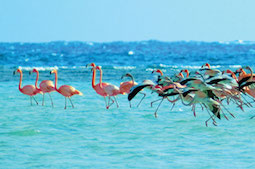 S-West-Indian-Flamingoes-of-Inagua-Bahamas.jpg