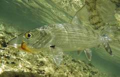 Sm-Fly-Fishin.jpg