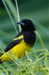 bird-sm.jpg