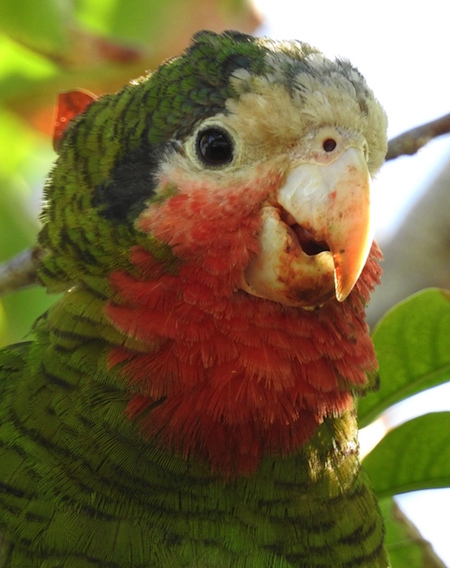 Birding-3-parrot.jpg