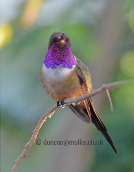 Birding-5.jpg
