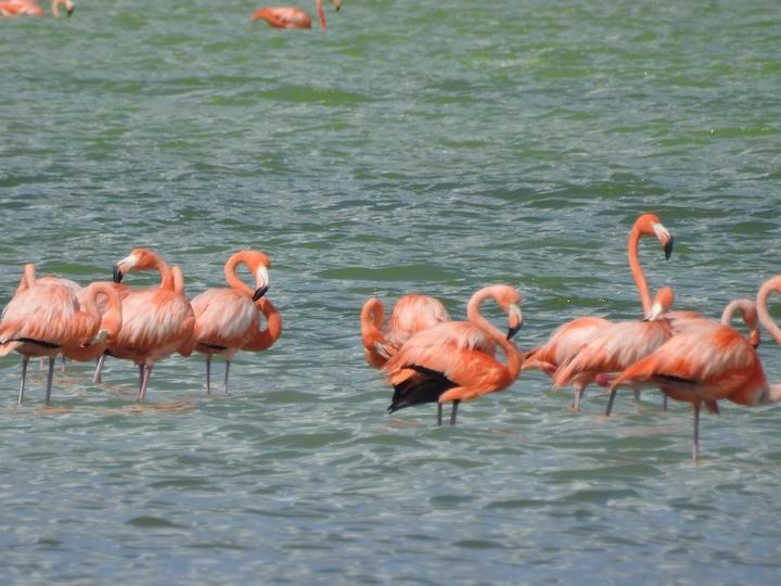 Birding-Flamingos-2.jpg