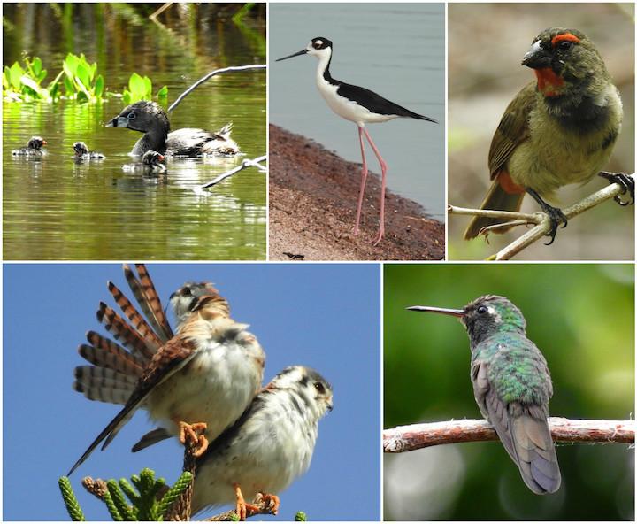 Birds-1-5.jpg