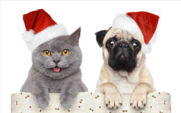 Christmas_Cat_and_Dog_1__1_.jpg