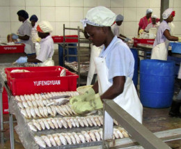 Guyana_and_other_CARICOM_countries_maintain_a_vibrant_fisheries_sector_-_photo_by_CRFM_1__1_.jpg