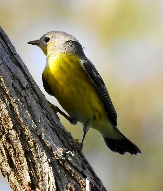 bird_3.jpg