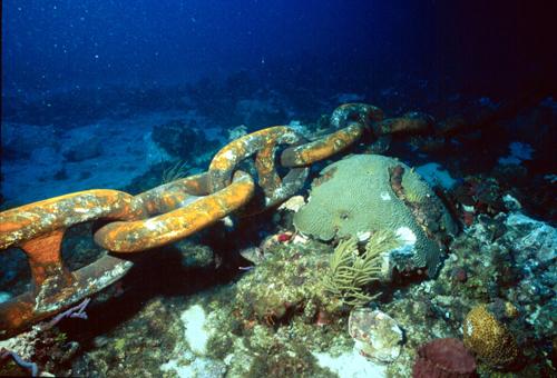 ReefArticlechain.JPG