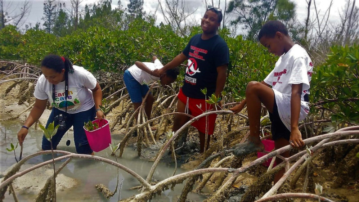 EARTHCARE_Eco_Kids_planting___________mangroves_at_Dover_Sound_1.jpg