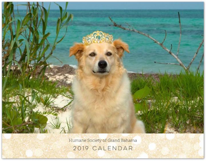 Humane_Society_Calendar.png