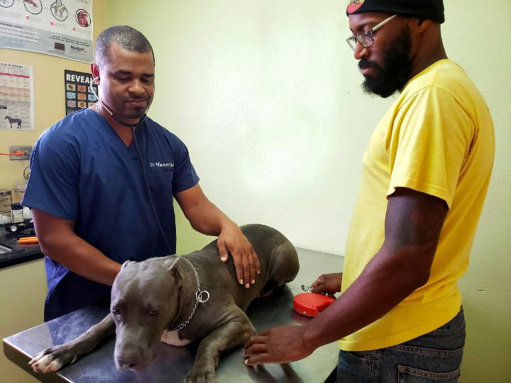 Veterinarian_Dr_Winston_Davis_examines_a_patient_1.jpg