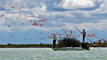 fly_fishing_in_Andros_with_beautiful_flamingoes_for_company.jpg