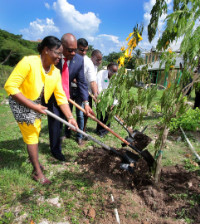 soil_-_PM_Gambier_Primary_School_for_Tree_planting_Sept_13__2018___268374_1_.jpg